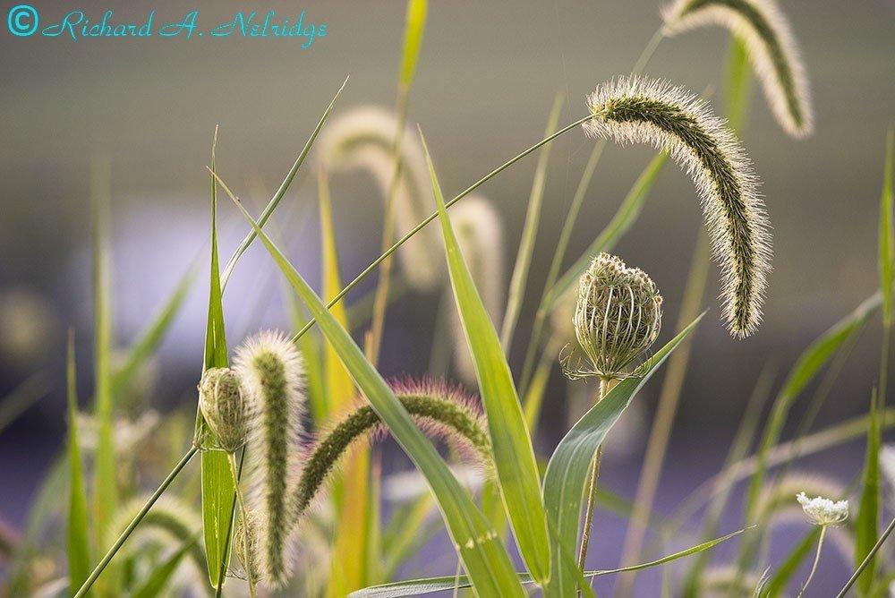 LYONVALLEYROADFLOWERS-GRASSES2